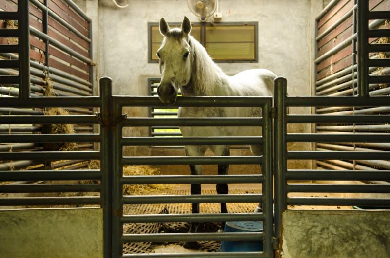 Ökopur Hors Pferdebox im Stall