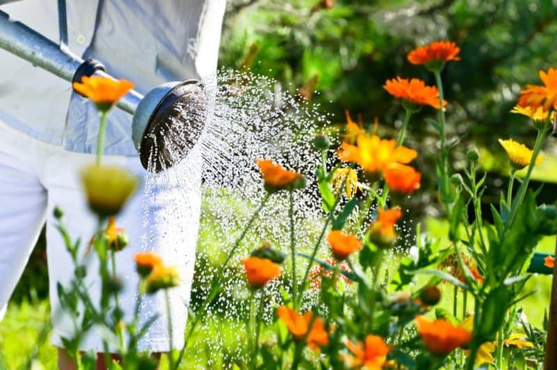 Ökopur Flora zur Desinfektion von Gießwasser