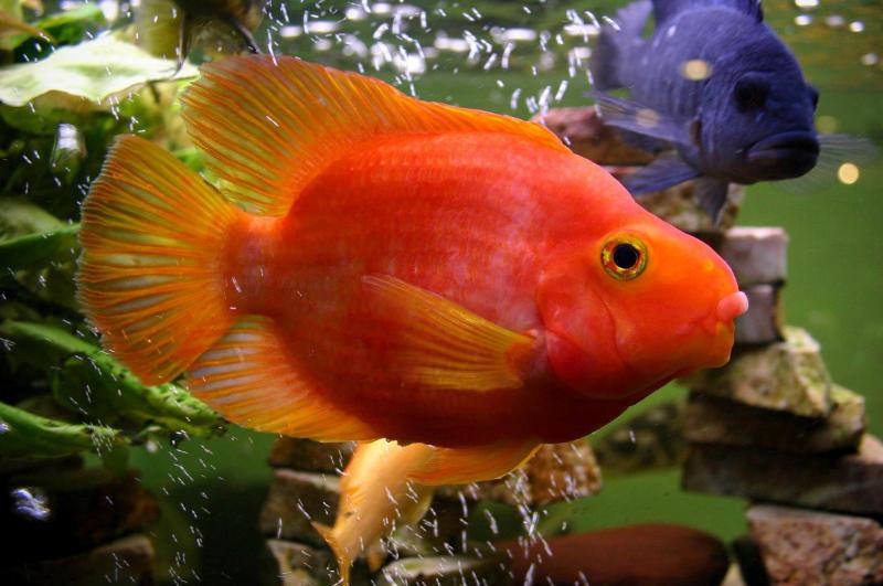 Ökopur animal - pets Aquarium