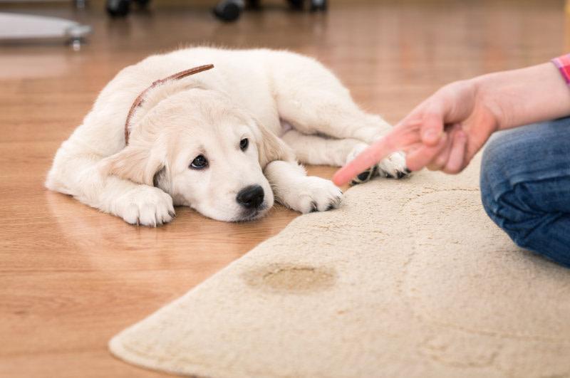 Ökopur animal - pets Hunde
