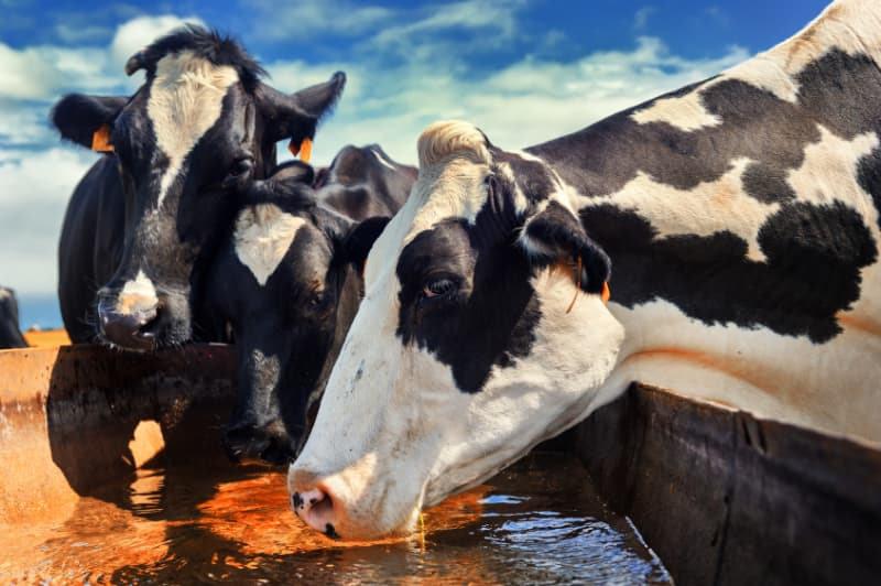 Ökopur Horse Wassertröge