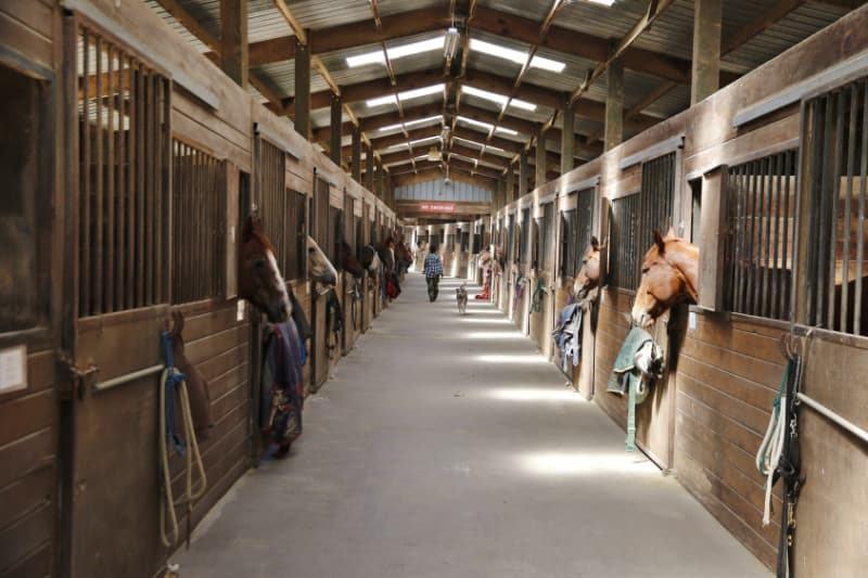 Ökopur Horse Zubehör im Stall