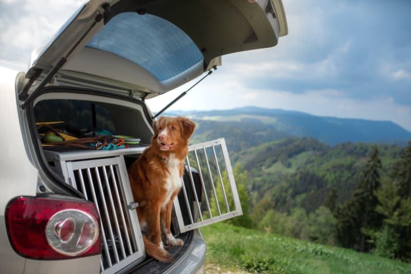 Ökopur animal - pets - Transportboxen