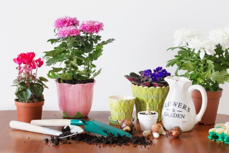 Ökopur flora - zur Desinfektion von Blumentöpfen