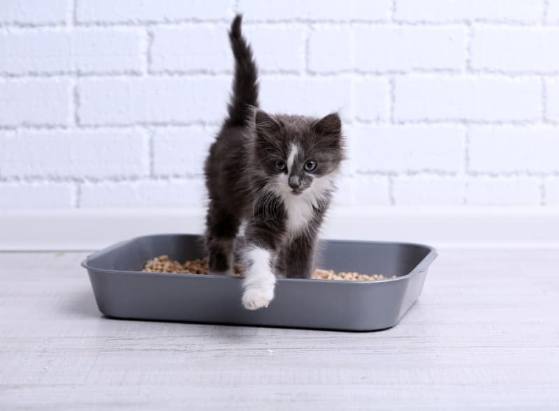 Ökopur animal - pets - Tiertoiletten