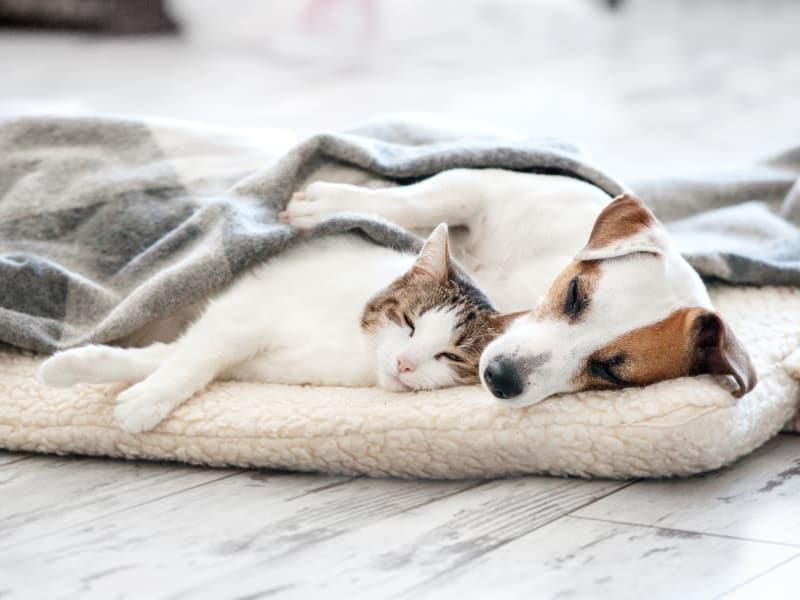 Ökopur animal - pets - Hunde- und Katzenbetten