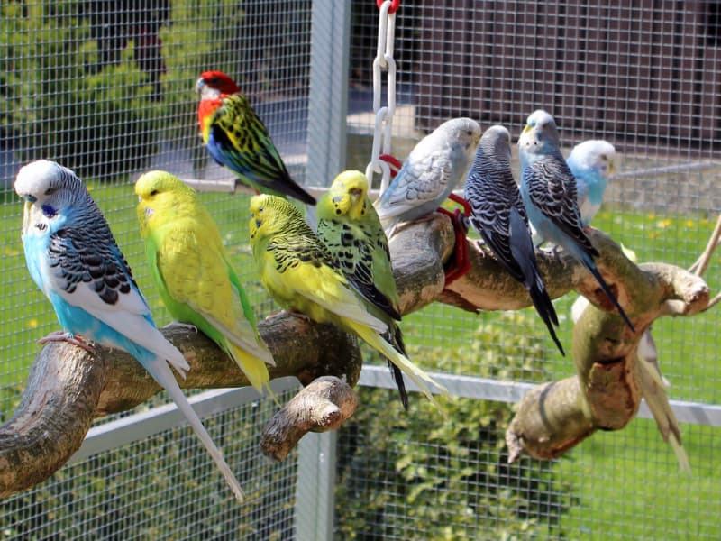 Ökopur animal - pets - Vogelkäfige